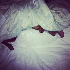 Lulu sleeping under covers