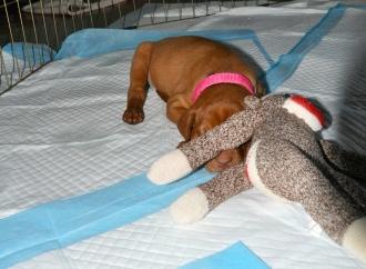 Darling loves her monkey