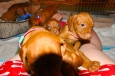puppy attack!